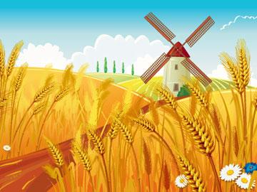 Пшеничне поле